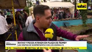 Ratas y peces en plaza de Ñemby para atraer a turistas