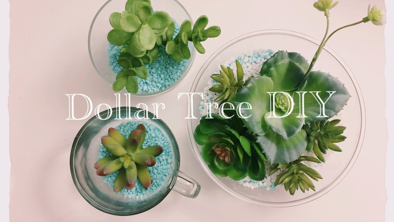 Diy Dollar Tree Succulents Terrariums Simple Easy Only 11 Youtube