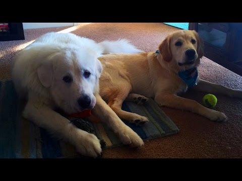 Super Cooper Sunday #18 - Coop has a BIG New Friend!
