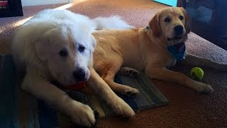 Super Cooper Sunday #18 - Coop has a BIG New Friend!