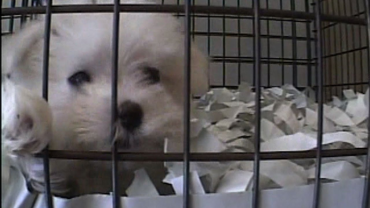 Pet shops in New York were investigated  All sourced their