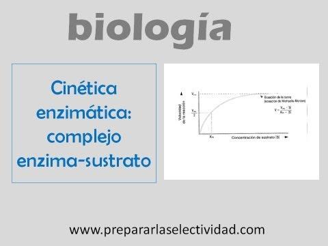 Cinética enzimática: formación del complejo enzima - sustrato