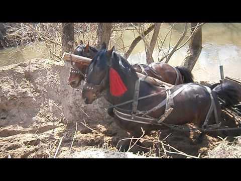 caii lu razvan groza