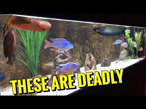 Top 5 NASTY DISEASES That KILL Aquarium Fish