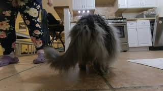 Spectre the Friendly and Messy Cat - Family Life - Dinner \u0026 Butt Fluff - 3D Cat Video (180VR LR)