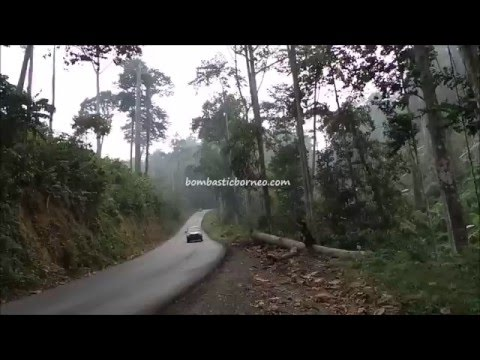 Nice jungle, on the way to Berau, East Kalimantan Indonesia Borneo