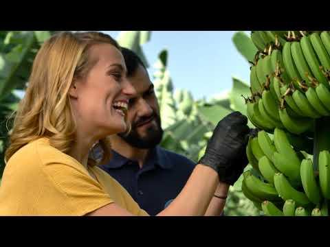 El cultivo del Plátano de Canarias con Mireia Belmonte thumbnail