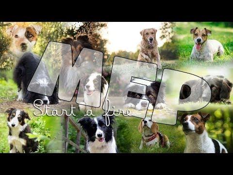 Start a fire | FULL DOG MEP