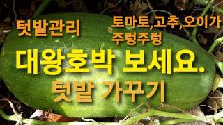 텃밭 가꾸기/텃밭관리/Growing Vegetables…
