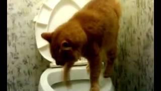 Приучился кошку ходить в туалет на унитаз. Система