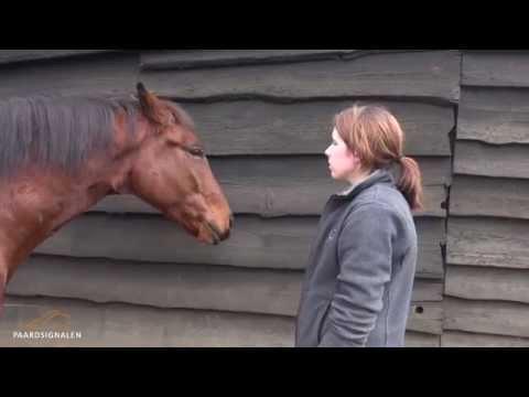 Hoe leer ik mijn paard een trucje?