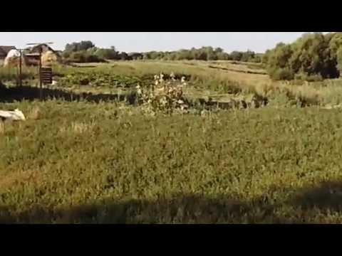 Липецкая область,Чаплыгинский район,село Нарышкино.