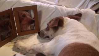 愛犬物語 この動画は愛犬サンゴの出産後の動画です。サンゴママはお産が...