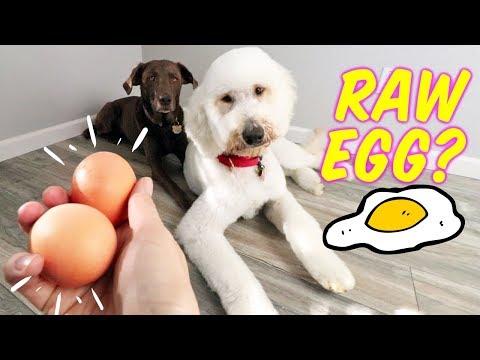 Feeding Dogs Raw Egg + Shell?! 🤔 Dog Egg Challenge + 10/10 CRUNCH FACTOR!