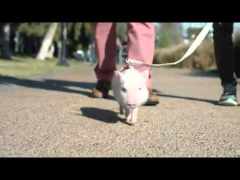 Chase Bank Commercial Walking Baby Pig