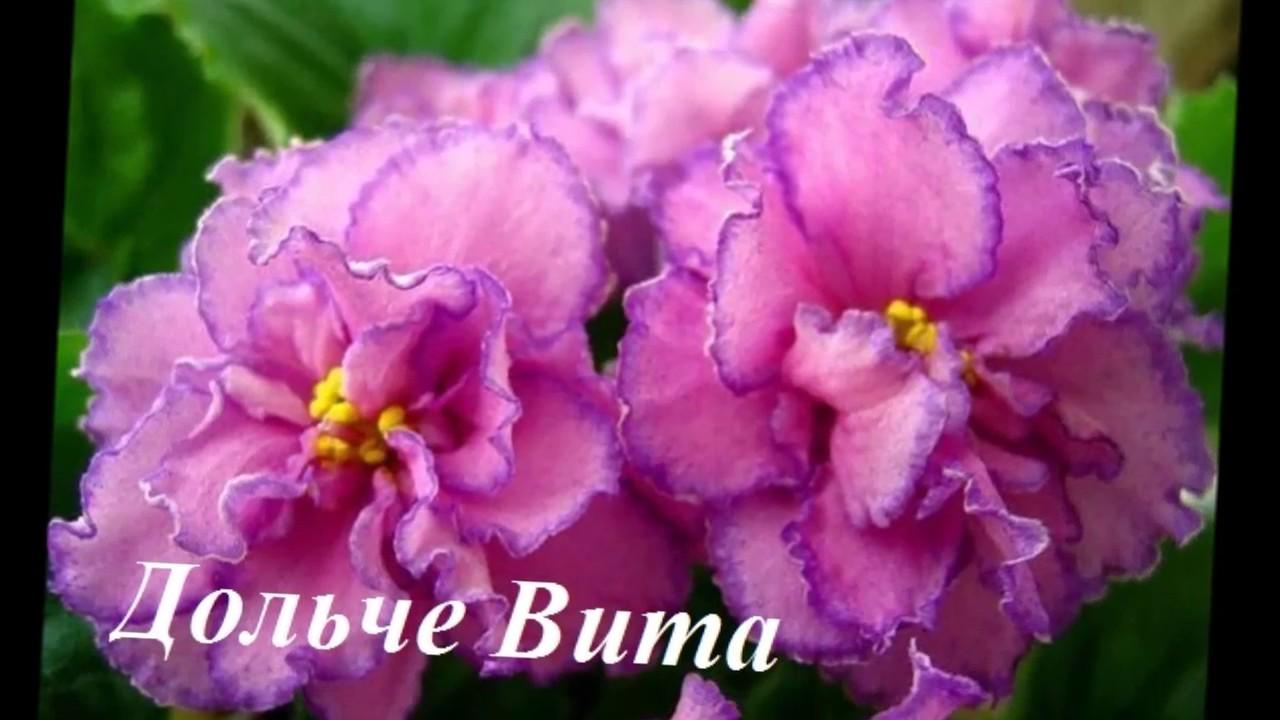 фиалки цветы фото