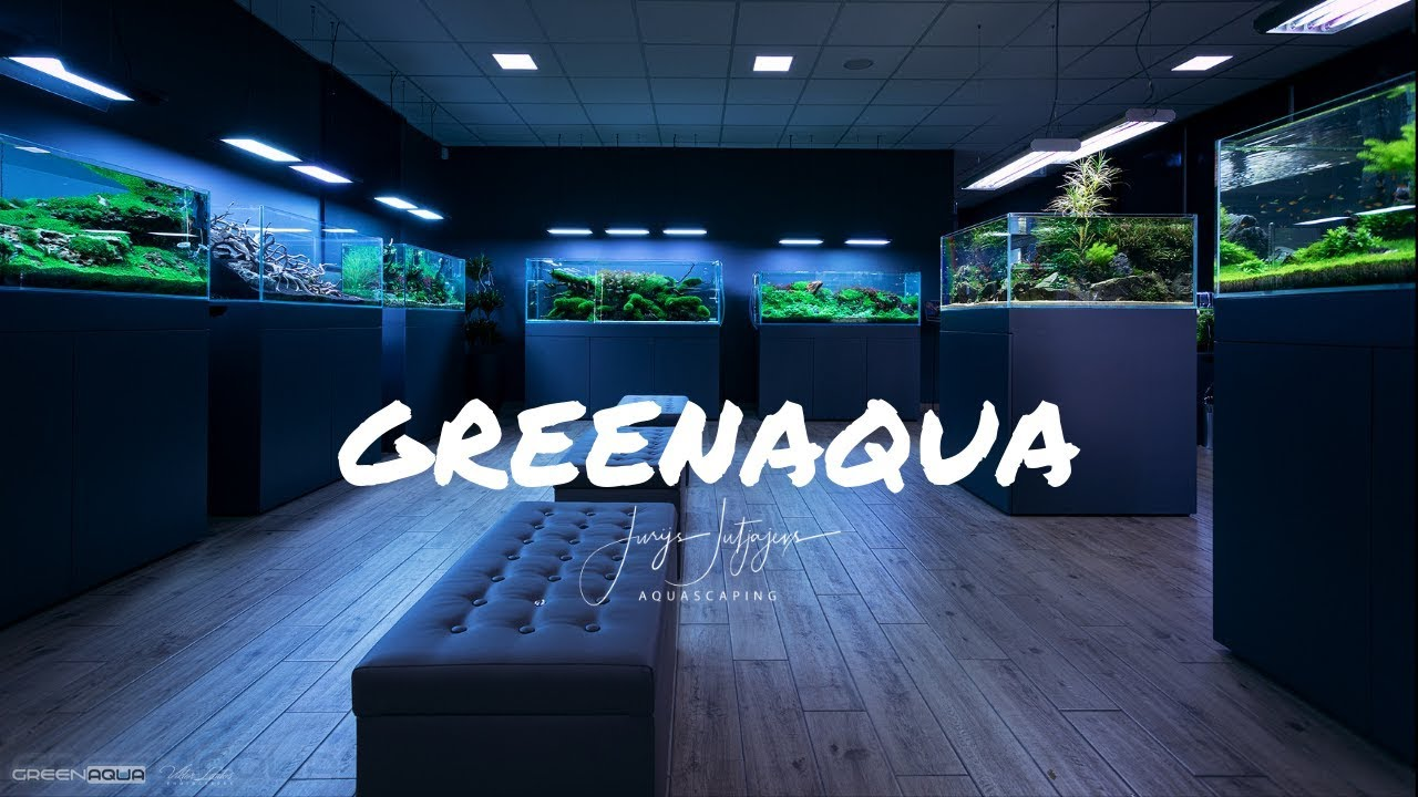 AMAZING AQUASCAPES at the BEST AQUARIUM SHOP in the world ...