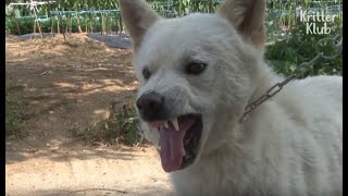 Cat Hunting Dogs Are Trained To Be Socialized (Part 2) | Animal in Crisis EP51