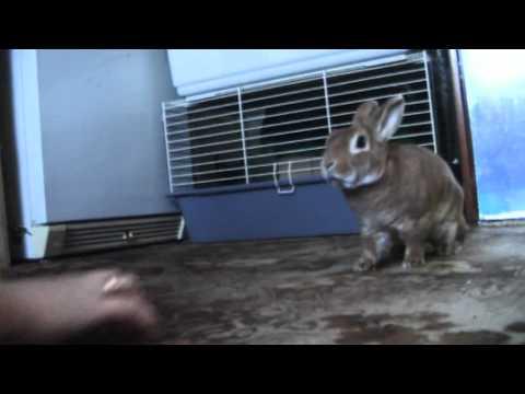 злой заяц
