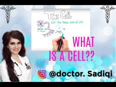 WHAT IS A CELL?? DIFFERENT CELLS, ITS HISTORY AND CELL THEORY EXPLAINED UNDER 5 MINUTES!!!
