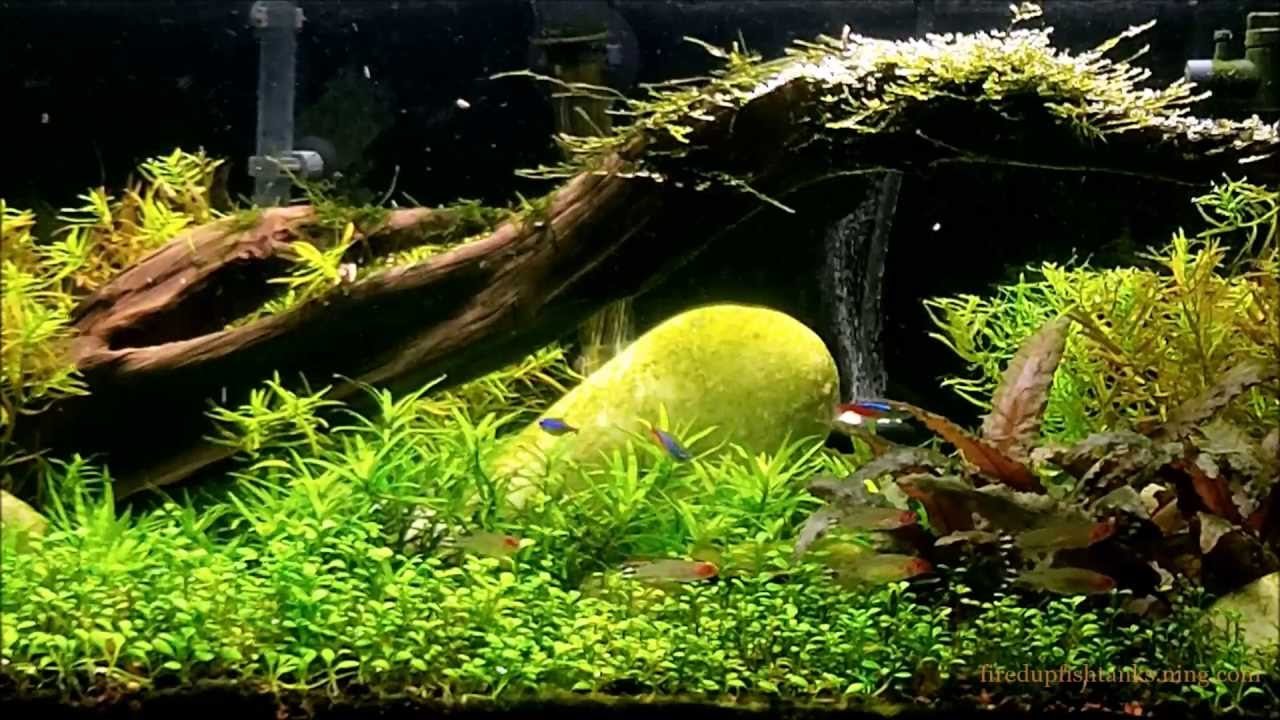 what substrate to use in a planted aquarium youtube