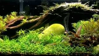What Substrate To Use In A Planted Aquarium.