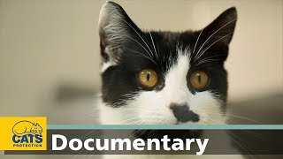 How cats hear: the world according to cats, episode one