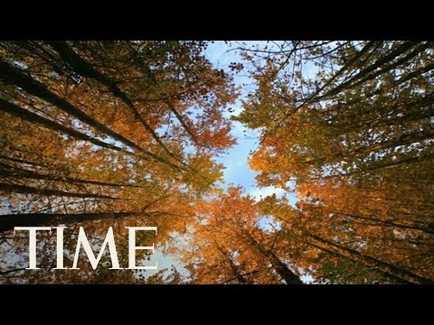 Download Youtube: Autumn Equinox 2017: Why Friday Is The First Day Of Fall In The Northern Hemisphere | TIME