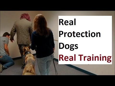 Personal Protection Dog Training (K9-1.com)