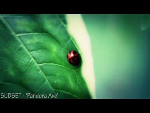 Pandora Ave
