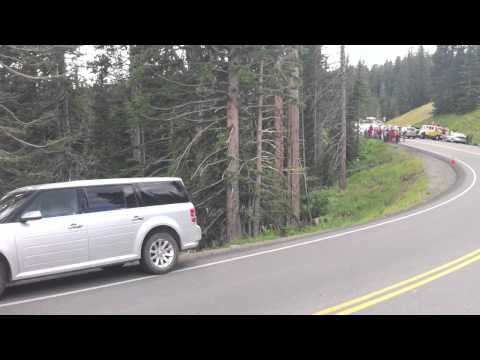 Grizzly bear & 2 cubs sighting Yellowstone park Wyoming