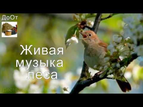 ♫ ЖИВАЯ МУЗЫКА ЛЕСА !!! ЛУЧШИЙ РЕЛАКС !!! ФЛЕЙТА !!!