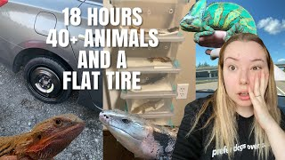 Driving 18 Hours With 40+ Animals! + We Got A Flat Tire | Moving Vlog #2