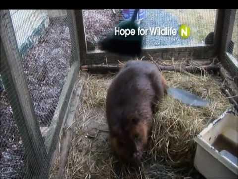 Viasat Nature Eastern Europe - Hope for Wildlife - promo