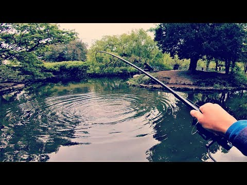 Five SPOTS Five FISH - Crazy Carp In London Ft. ANTI-Fishing People