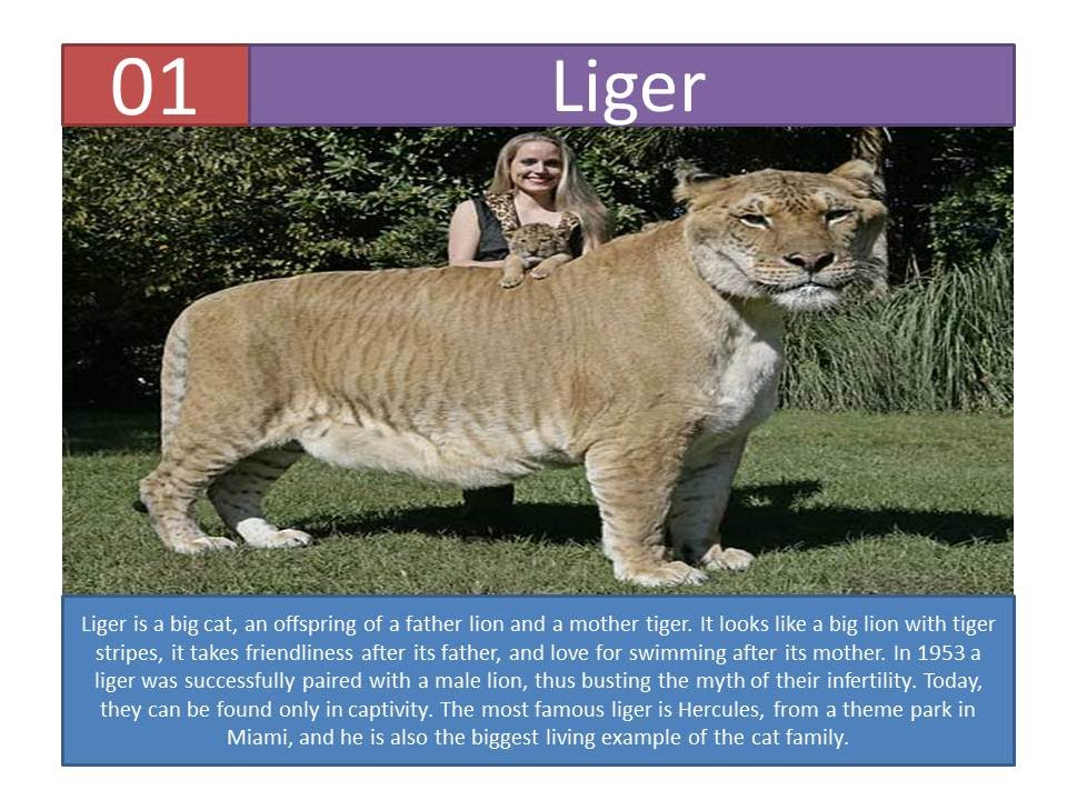 Top 10 Awesome Hybrid Animals
