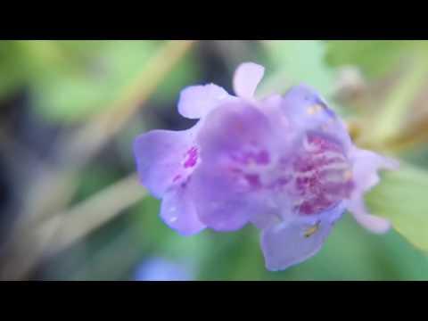 Красивый СИНИЙ цветок. Какое название?