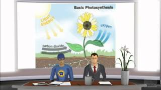 Can Photosynthesis Take Place Under Any Light Source Other Than Sunlight