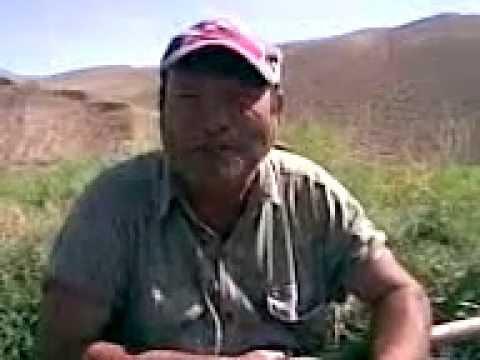 Turkmen Prikol, Goshgy, Hemra Aga