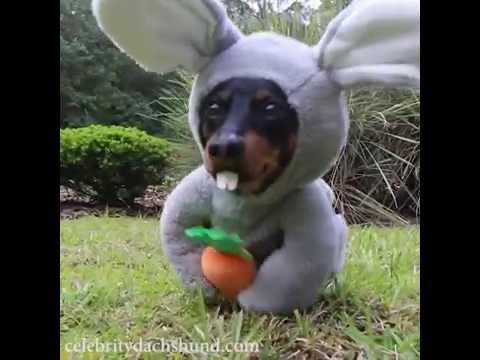 Easter Bunny Wiener Dog!