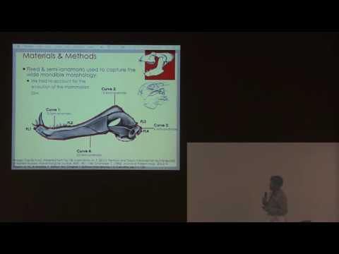 Investigating the decline of the Synapsida using mandibular morphometrics