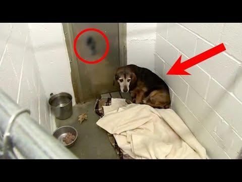 Zwei Jahre nachdem der Hund weg lief, hörte er die Stimme seines Besitzers und verblüffte alle!