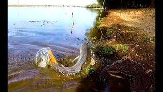 Рыбалка на Ахтубе Ловля на закидушки со жмыхом осенью