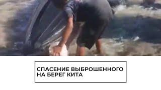 Cпасение выброшенного на берег кита обернулось трагедией