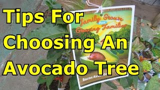 Must Watch Before Buying an Avocado Tree from the Nursery