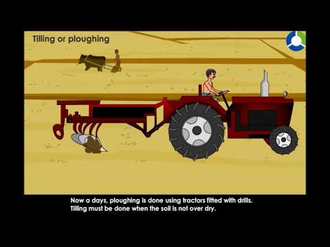 Tilling or Ploughing