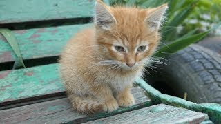New kitten lives with cats on the street