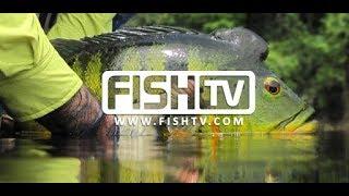 Fish TV ao vivo