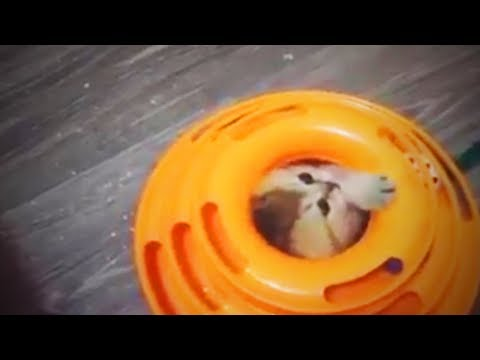 Awesome Pets   😍 Funny and Awesome Pets (Part 2) [Funny Pets]
