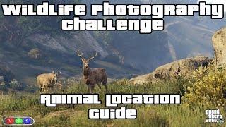 GTA V Wildlife Photography Challenge Guide